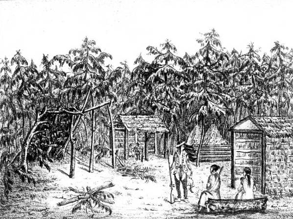 A Seminole village by Castelanau, 1838