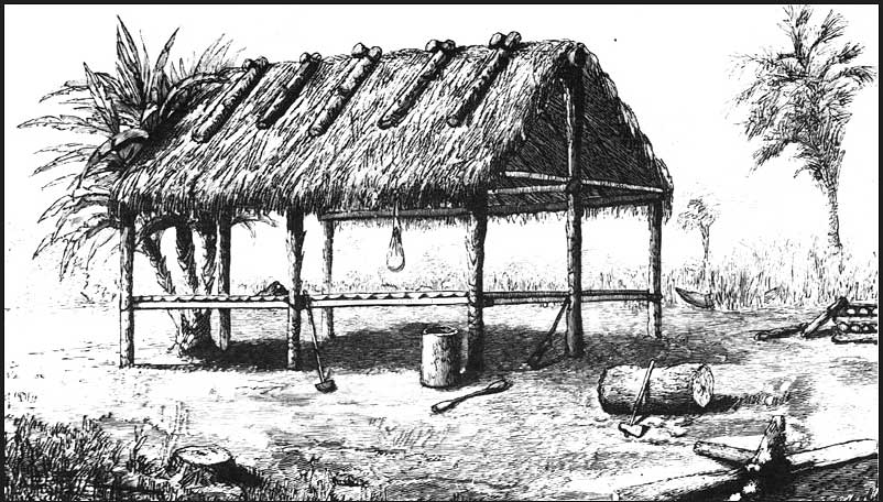 Engraving of a chickee, or Seminole dwelling, circa 1880
